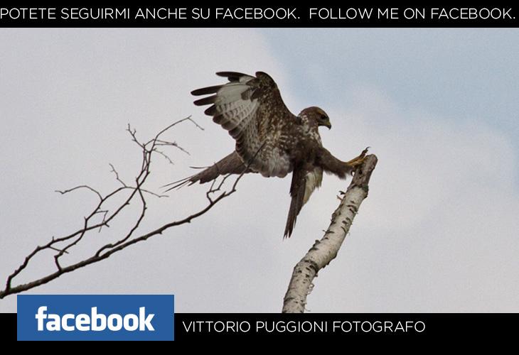 Potete seguirmi anche su facebook. Follow me on facebook.